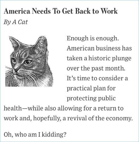 ネコとイヌが経済活動再開の議論に関連した画像-02
