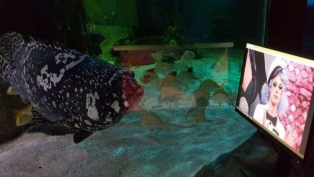 イギリス 水族館 ネットフリックスに関連した画像-01