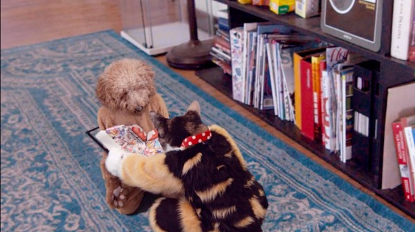 飼い主の居ぬ間に「犬と猫」がカンフー戦争に関連した画像-05