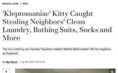 洗濯物 猫 泥棒に関連した画像-02