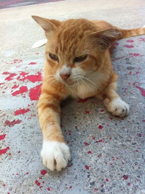 ネコが流血に関連した画像-05