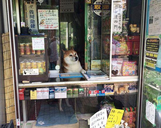 武蔵小金井にあるタバコ屋さん「鈴木たばこ店」に関連した画像-02