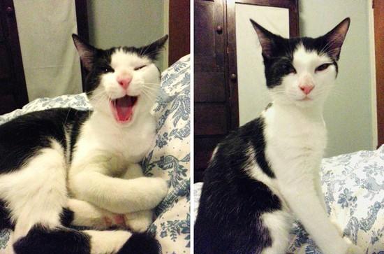 どうしようもないほどネコが嫌な奴と化す時に関連した画像-05