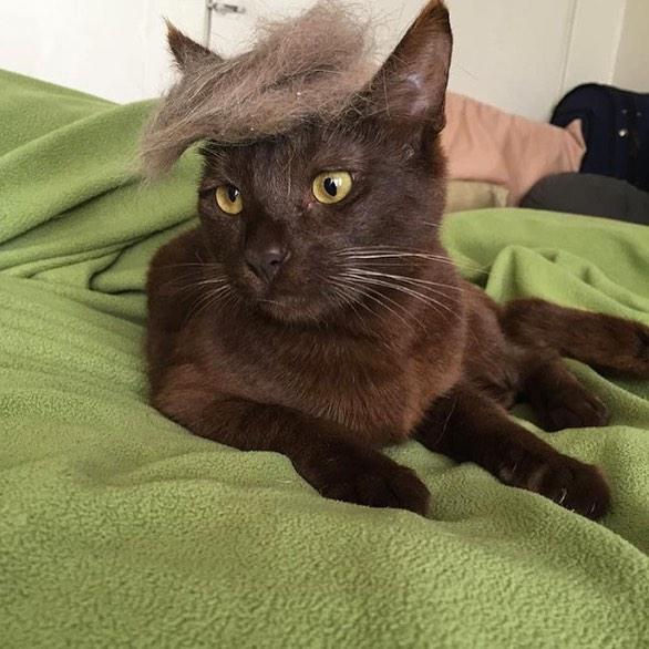 「猫かつら」装着例に関連した画像-03