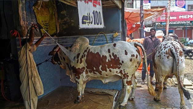パキスタン 洗車場 動物に関連した画像-01