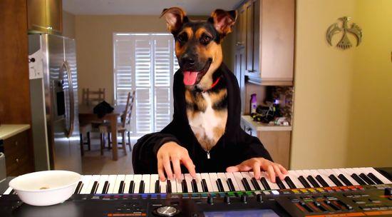 犬がピアノでワルツを演奏に関連した画像-01
