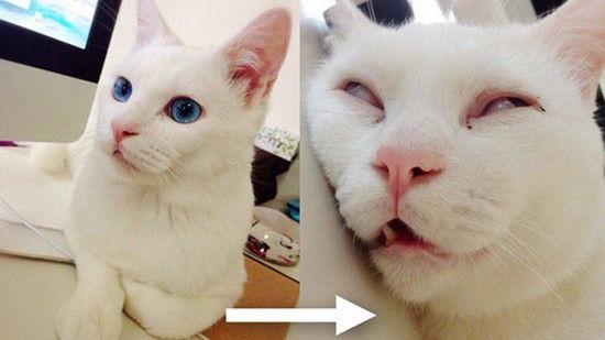日本一寝顔が酷い絶世の美猫セツちゃんに関連した画像-01