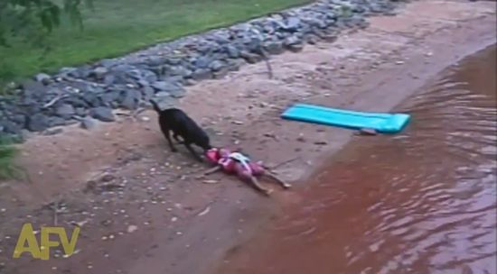 救助犬が水遊びを楽しむ子供を救助に関連した画像-03