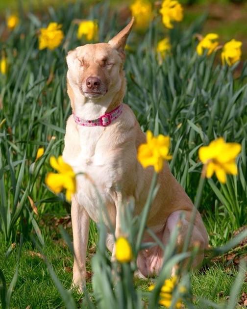 犬のマギーちゃんに関連した画像-03