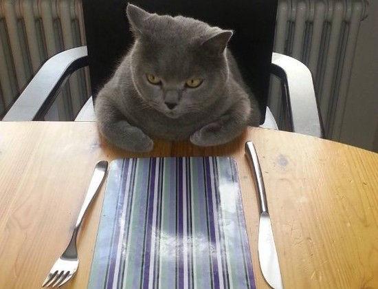 ネコたちが教えてくれる、月曜日のツラさに関連した画像-14