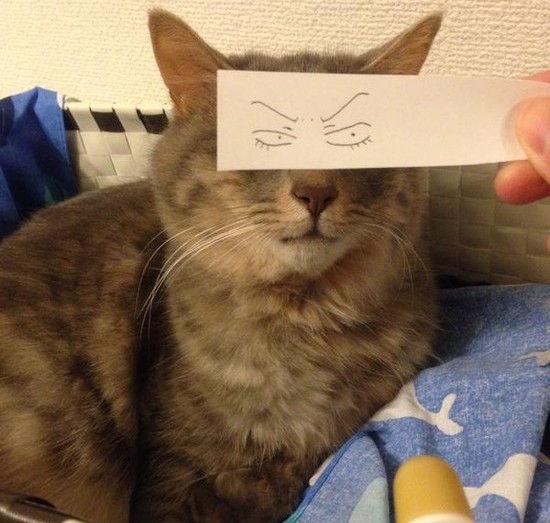 猫モンタージュに関連した画像-06