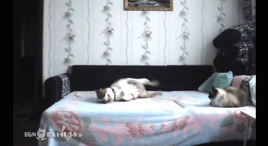ベッドに上がることを禁止された犬に関連した画像-04