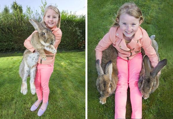 世界一大きなウサギに関連した画像-05