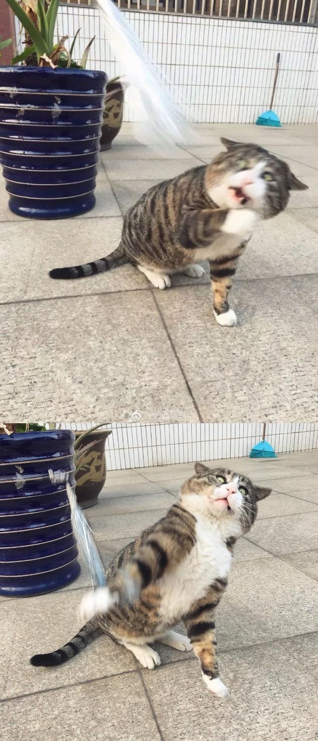 猫「アーフェイ」に関連した画像-02