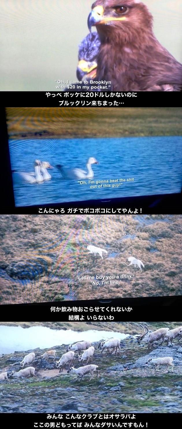Netflix配信の『プラネットアース』で字幕バグに関連した画像-02