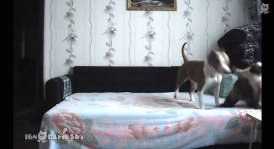 ベッドに上がることを禁止された犬に関連した画像-07