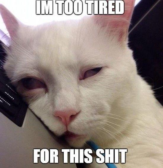 日本一寝顔が酷い絶世の美猫セツちゃんに関連した画像-10