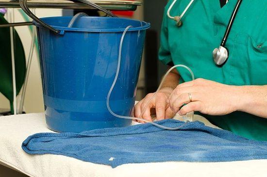金魚・ジョージの腫瘍摘出手術に関連した画像-04