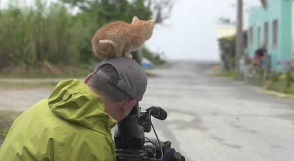 岩合光昭の世界ネコ歩き「沖縄」に関連した画像-08