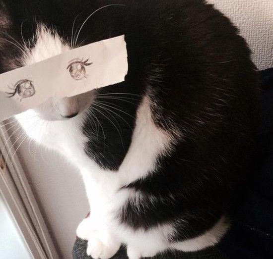 猫モンタージュに関連した画像-07