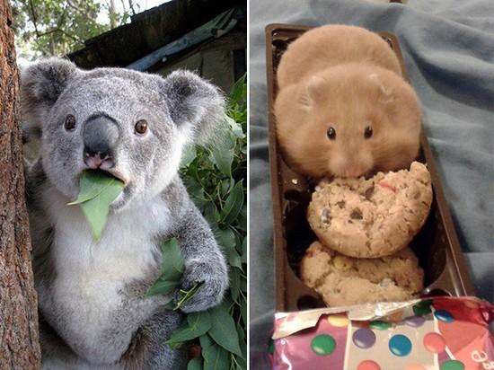 食べ物を前にヘブン状態の動物に関連した画像-07