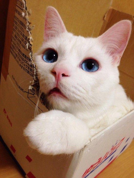 日本一寝顔が酷い絶世の美猫セツちゃんに関連した画像-03