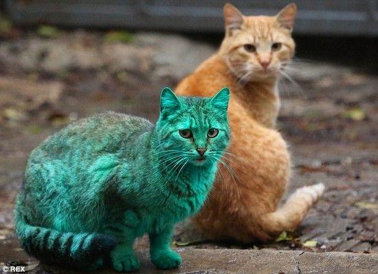 全身緑色の猫に関連した画像-03