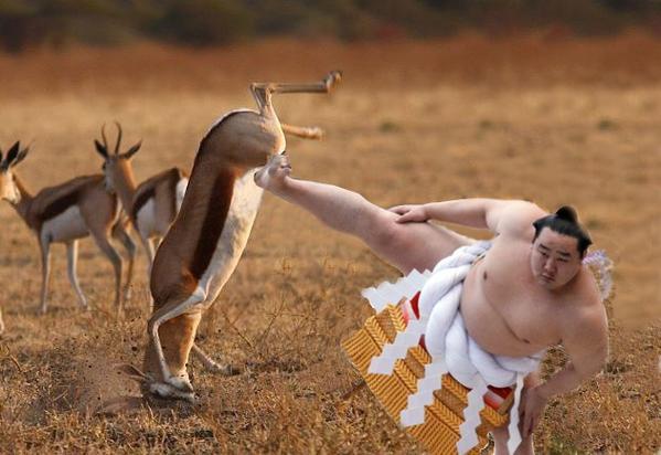 日本にラグビーで負けた南アフリカ代表、現地ネット民によりネタの餌食に関連した画像-12