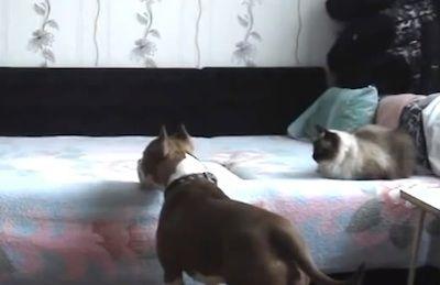 ベッドに上がることを禁止された犬に関連した画像-01