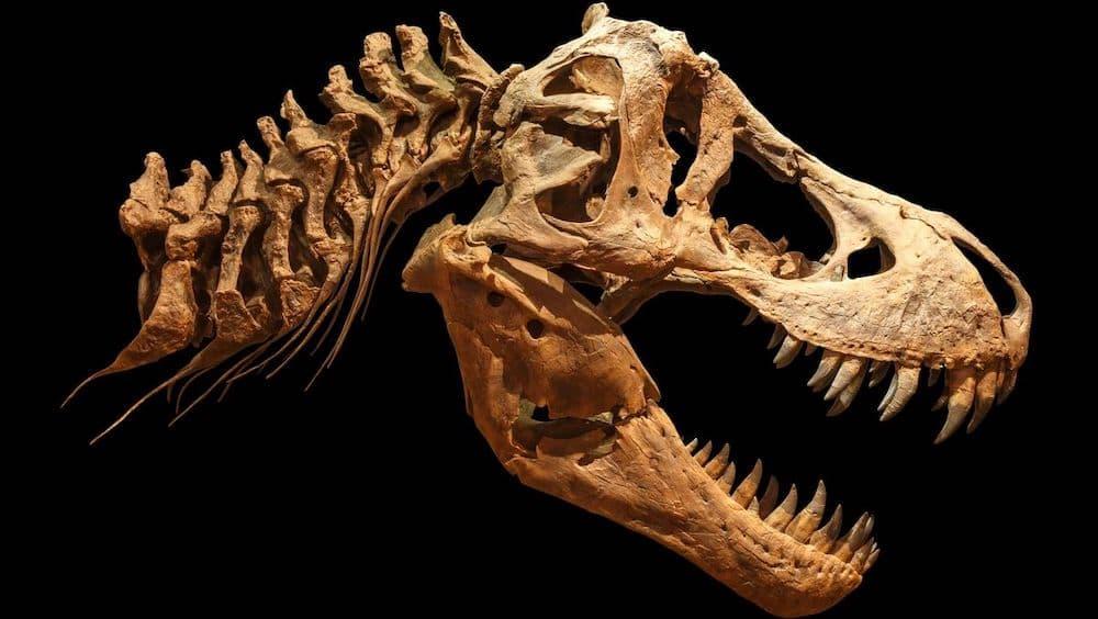 ティラノサウルス 恐竜