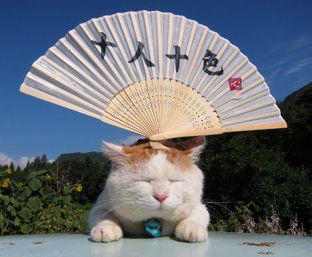 日本のネコ『のせ猫』が海外で評判に関連した画像-11