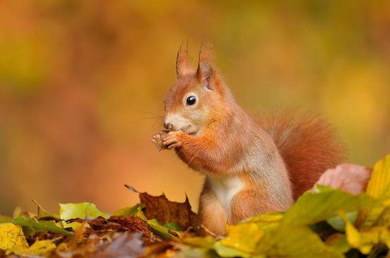 秋を楽しむ動物たちに関連した画像-02