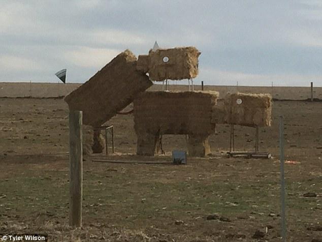 干し草で作った牛の芸術作品に関連した画像-05