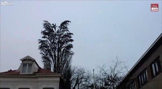 鳥の群れが一斉に飛び立つに関連した画像-01