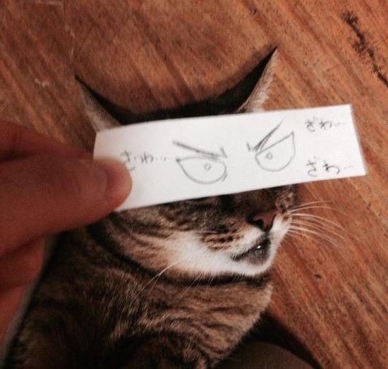 猫モンタージュに関連した画像-04
