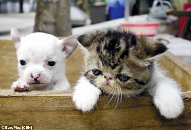 ネコから犬が産まれるに関連した画像-06