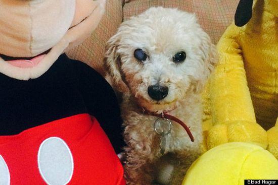 床下で1年間…亡き主人を一人待ち続ける犬を救出に関連した画像-05