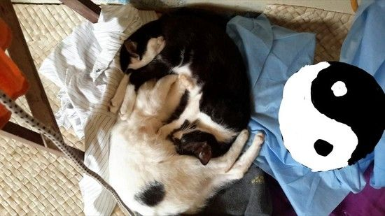変装がうますぎるネコに関連した画像-04