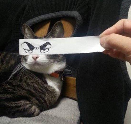 猫モンタージュに関連した画像-05