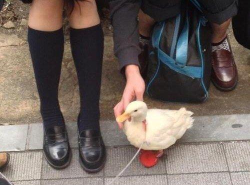 今すぐ日本に移り住むべき27の理由に関連した画像-06