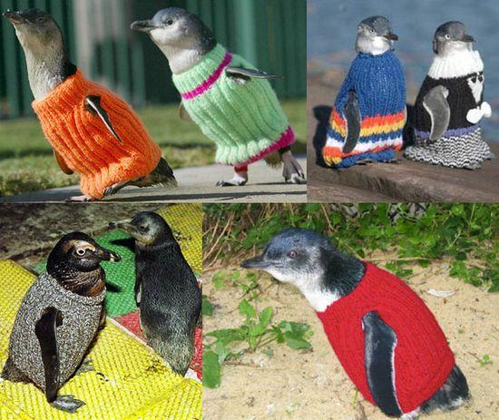ペンギンにセーターをに関連した画像-02