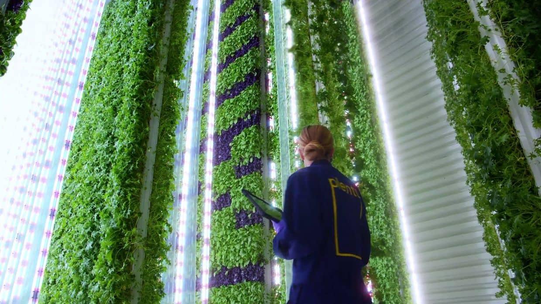 ロボット AI 垂直農業 垂直農法 Plenty