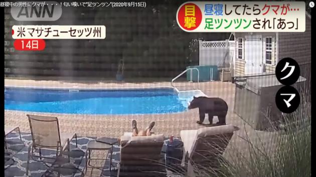 アメリカ クマ 昼寝