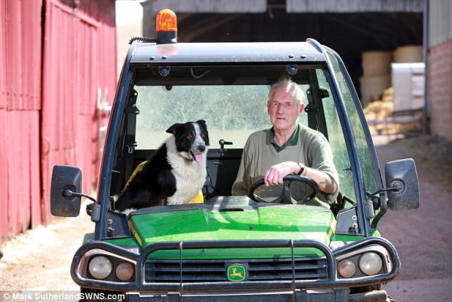 牧羊犬がトラクターを運転し、高速道路が交通渋滞に関連した画像-02