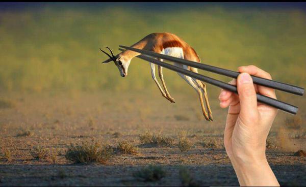 日本にラグビーで負けた南アフリカ代表、現地ネット民によりネタの餌食に関連した画像-07