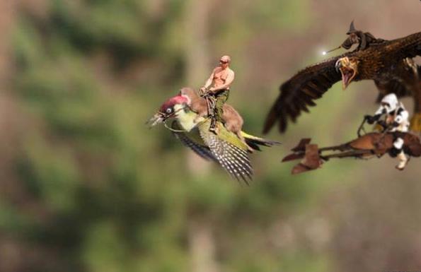 イタチがキツツキの背中に乗って、空を飛んだに関連した画像-06