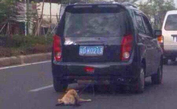 中国、犬を車で引きずる画像が出回りネット大炎上に関連した画像-01