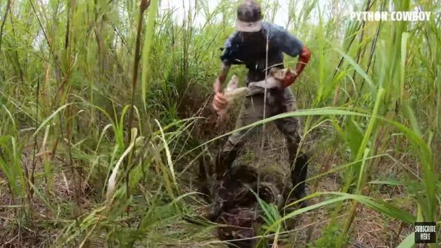 フロリダ ニシキヘビ 巨大に関連した画像-04