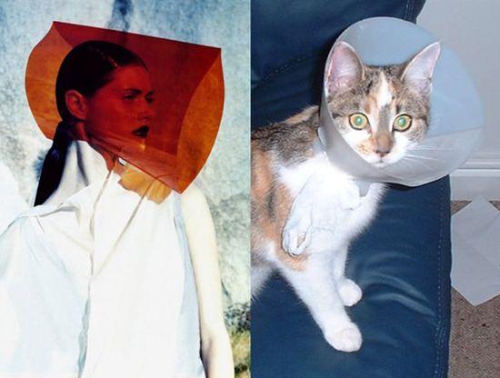 ネコだけど、モデルのポーズに関連した画像-08