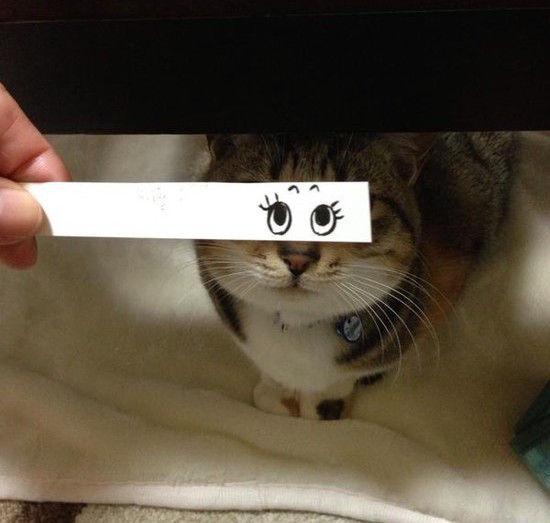 猫モンタージュに関連した画像-11